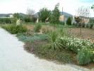 Παραθαλάσσιος Κήπος Ερμιόνη :: Σύνθεση Λαντάνας έρπουσας
