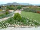Παραθαλάσσιος Κήπος Ερμιόνη :: Lantana Sellowiana, Convolvulus cneorum, Convolvulus cneorum